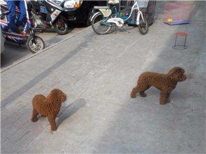 这是双胞胎狗狗吗