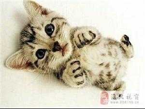 家里有一只乖猫猫 求收养