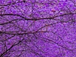 紫色,沉醉在迷幻梦境里。