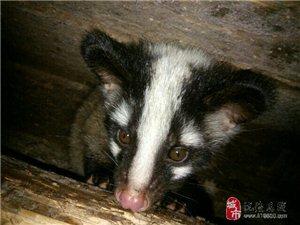 澳门金沙县特种野生动物养殖繁育基地