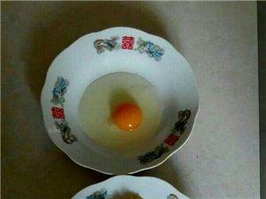 松林草�u蛋上市了,��G色食品,是孕�a�D�胗�杭袄夏耆说淖罴蜒a品,有需要的�系我,��G色食品,假一�r十
