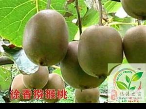 徐香猕猴桃,味道香甜,5斤40元,临潼地区免费送货
