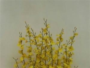 种花,养花,插花,花艺