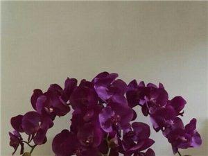�N花,�B花,插花