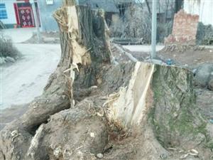 出售老树根