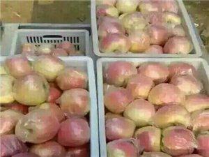 水果之乡安徽砀山苹果