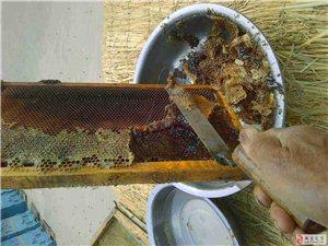 售自家蜂蜜