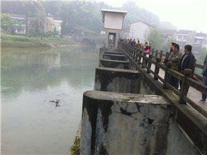 黄材一女子走路玩手机,不慎坠河溺水身亡。