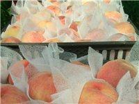 今年伊祁山周边的鲜桃还能运的出来吗?顺神路现在修到哪了?