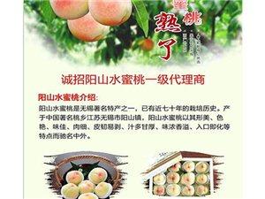 阳山水蜜桃,从枝头到舌尖的美味