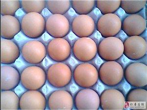 绿色农家鸡蛋,天然无任何添加剂