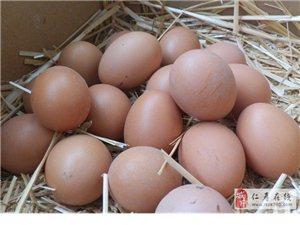 纯正好鸡,纯真好蛋!绿色天然无添加剂~