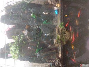 專業制作假山魚池