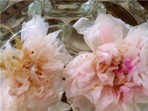 洛施花舍玫瑰花茶的精致生活