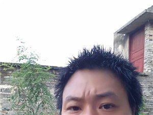 湘湖苗木銷售