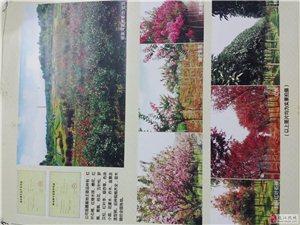 承接各种绿化工程,收售各种绿化树木!