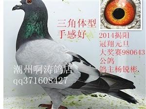 潮州啊涛鸽店