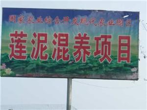 國家重點扶持項目蓮藕基地