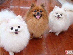 金沙网站宏达繁殖犬业