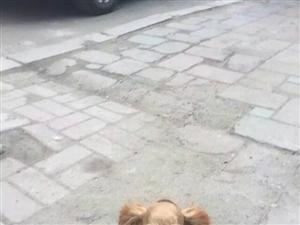 寻狗主人。