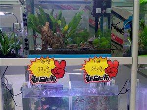 富平生態魚缸真山真水草常年免換水