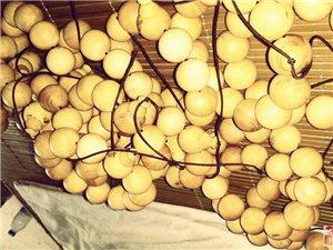 小葉黃楊木產自湖北,加工地住美麗的鄱湖之濱殷畈村