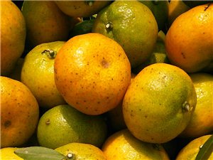 蜜橘批发零售