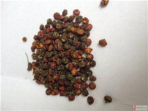 新疆野生雪菊胎菊