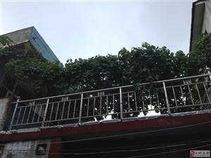 高楼新村,雪枫路南段
