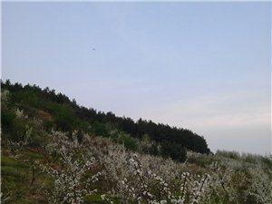 乌林后山果园