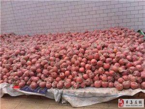 苹果往外卖啦