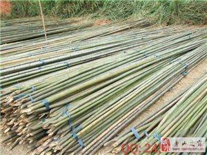 竹竿批發 菜園搭架細竹桿庭院裝飾籬笆竹圍欄 裝潢