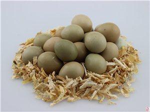 批发野鸡蛋,野鸡,野鸭等野味