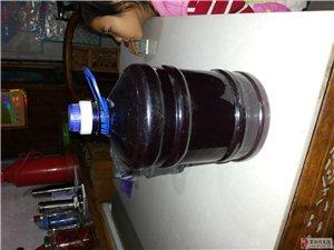 自家种的葡萄自己酿的红酒