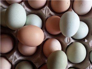 散养土鸡蛋,假一赔十
