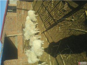 绒山羊养殖户。