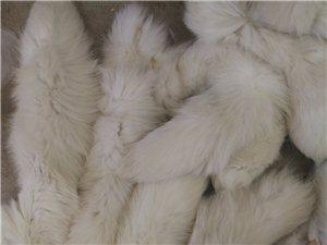 長期收購蘭狐貍尾巴,自己廠,自用