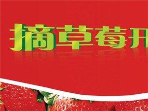 交城草莓、蔬菜采摘、批发(交西公路大营段)
