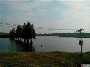 130畝漁池招租