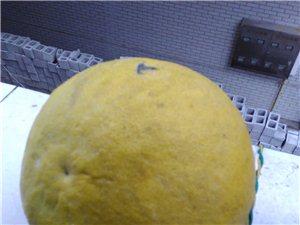 自己家柚子,柑子