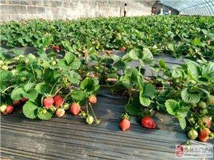批发草莓送货上门
