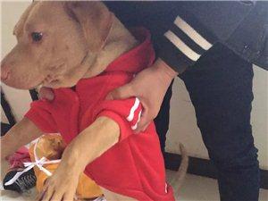 狗狗被偷,有知情者当面酬谢。
