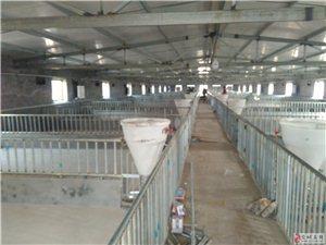 标准化规模化养猪项目