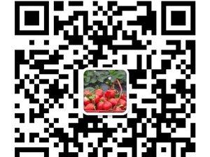 鮮果采摘園歡迎關注