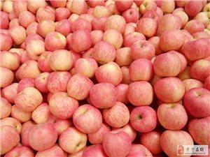 大量出售长枝富士苹果