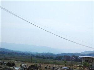 五梅山生態農場主產雞鵝魚
