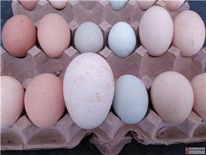 香醇雁,土鸡乌鸡,蛋类,野味