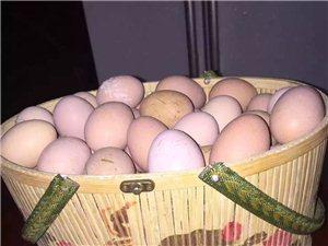 新鲜土鸡蛋便宜出售