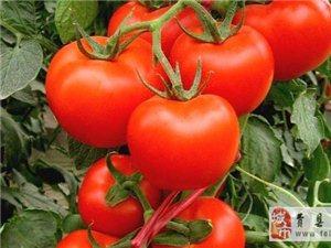 鲁南瓜菜交易市场,欢迎广大供应商前来收购