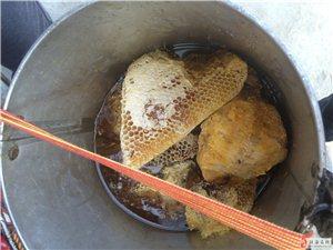 五指山野生土蜂蜜、排蜂蜜、牛大力、血藤